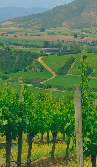 Wine Tours in Chile and Argentina