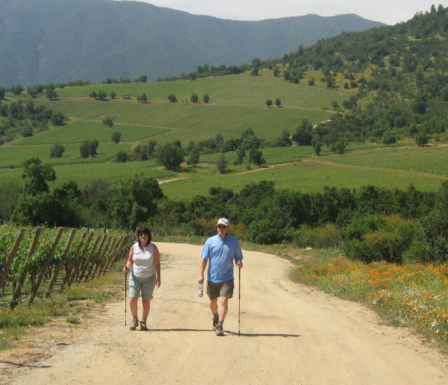 About wine travel Chile