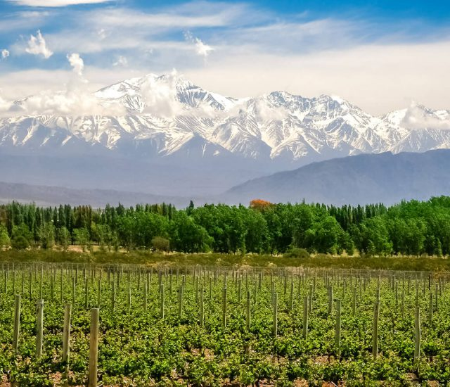 Wine tasting and hotel packages Argentina